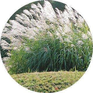 Propozycje roślin do ogrodu inspirowanego stylem afrykańskim