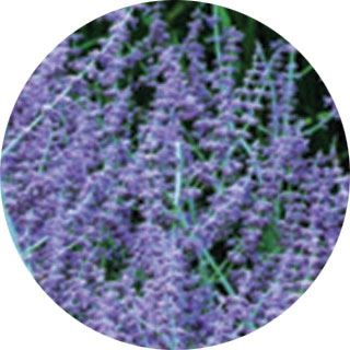 Propozycje roślin do ogrodu w stylu skandynawskim